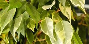 Schneckenkorn Giftig Für Hunde : welche garten zimmer und k belpflanzen sind f r hunde ~ Lizthompson.info Haus und Dekorationen