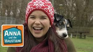 Haustiere Für Kinder : hund reportage f r kinder anna und die haustiere youtube ~ Orissabook.com Haus und Dekorationen