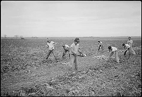 Amache Internment C Internees Farming Beets While Relocated At The