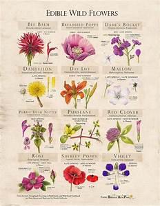 Edible Flowers  Foraging  U0026 Feasting U2019s Essential Info