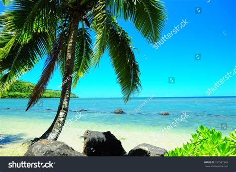 Hawaiian Beach Paradise Palm Tree Stock Photo 101587348