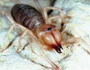Empire An The Camel Spiders ~ The Nature Animals