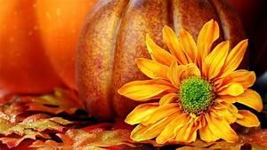 fall wallpapers pumpkin - HD Desktop Wallpapers   4k HD