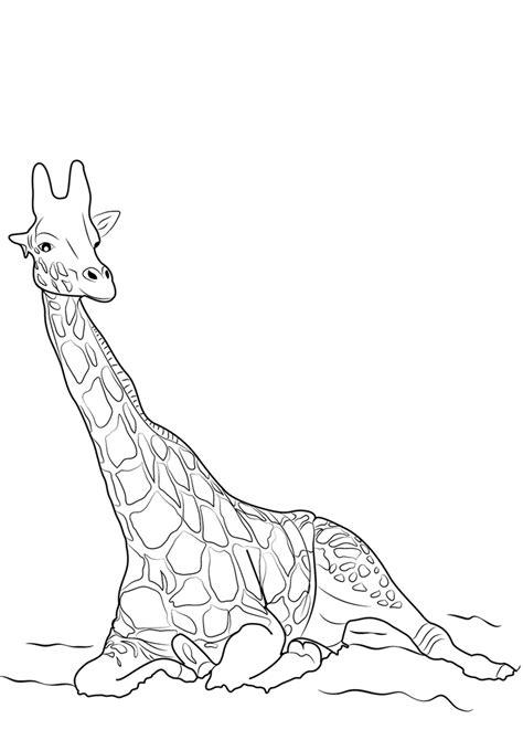 30 Disegni di Giraffe da Colorare | PianetaBambini.it
