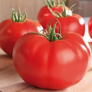Planter Graine Tomate : tomate supersteak f1 graines vari t hybride fruits normes ~ Dallasstarsshop.com Idées de Décoration
