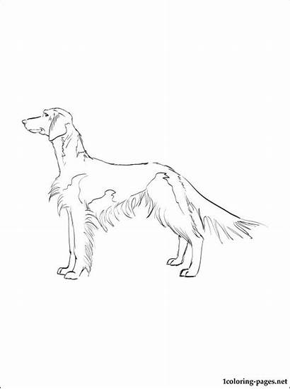 Spaniel Coloring Springer Welsh Cocker Pages Printable