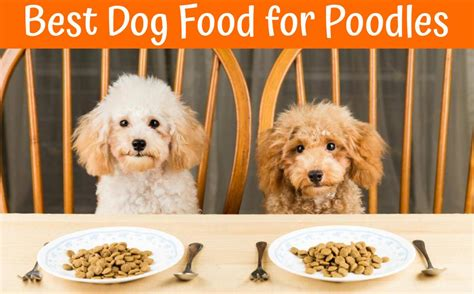 dog food  poodles guide    bones