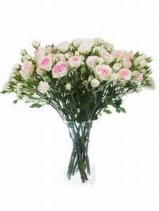 Hortensien In Heißes Wasser : astilben europa prachtspiere rosa september blumen ~ Lizthompson.info Haus und Dekorationen