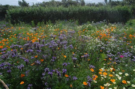 allotment  category higgledy garden