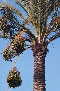Is Palm Fruit Oil Good For You