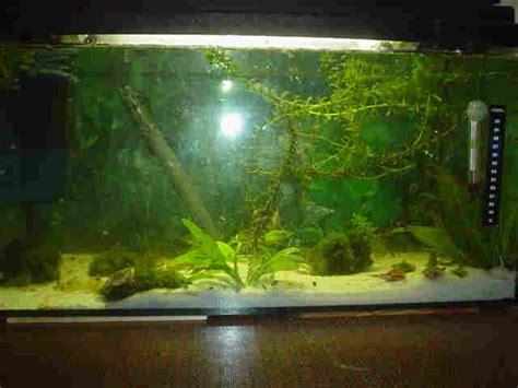 wie warm muss ein aquarium sein faq aquarium