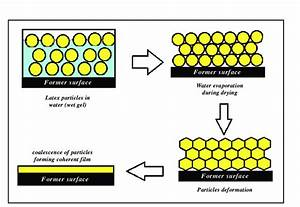 Schematic Diagram Of Latex Film Formation