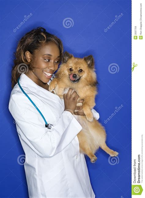 woman veterinarian holding dog royalty  stock images