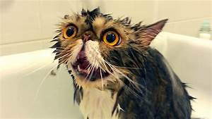 Laver Un Chaton : avec quoi laver son chat comment arreter un chat de ~ Nature-et-papiers.com Idées de Décoration