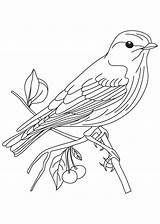 Coloring Goldfinch American Finch Yellow Designlooter sketch template