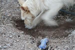 Hund Im Garten Vergraben : lustige hundegeschichten plauderecke der hund ~ Lizthompson.info Haus und Dekorationen