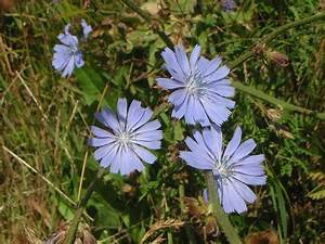 Bloom Clock  Keys  Southeastern Pennsylvania  July  Blue