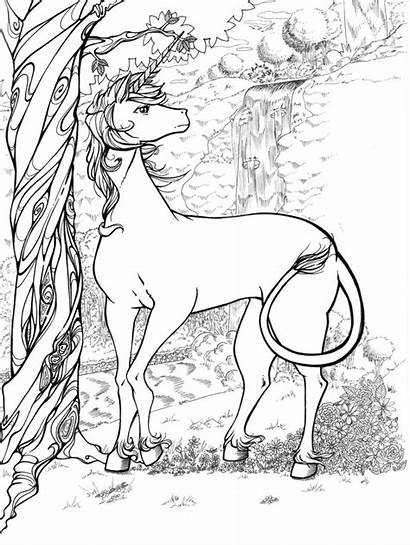 Coloring Pages Unicorns Unicorn Horn Word Horns