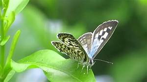 Butterfly Land,tiss hyderabad, life science project (ba ...
