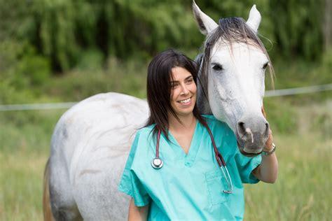 vet horse veterinary equine veterinarian horses animal animals swinging clinics safe keep door outward sliding doors using clinic hardware careers