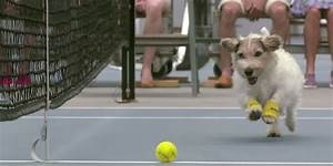 Tennis Ball Boys Are Out, Long Live The Ball Dog