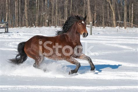 horse running   snow side view stock