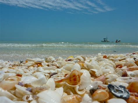 Stroll Along: Relaxed Shelling On Captiva Island   Captiva Island Resort   'Tween Waters Inn