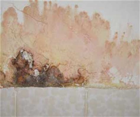 Serratia Marcescens Bathroom Dangerous by Cleaning Business Today Biofilm What It Is And How To
