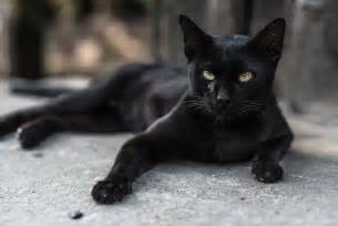 black cat names black cat names cattime