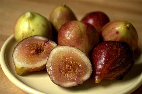 when are figs in season houston homebody in season fresh figs