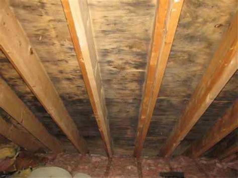 remove black mold  wood youtube