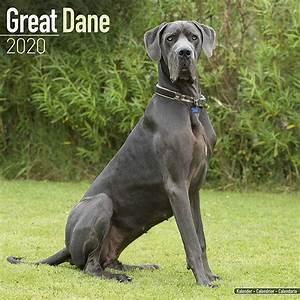 Great Dane Euro Calendar 2020 | Pet Prints Inc.