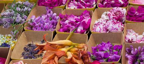 des fleurs dans nos assiettes