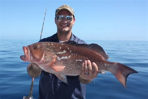 grouper fish benefits health larry