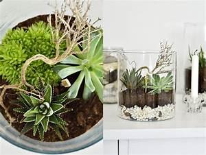 Sukkulenten Im Glas : sinnenrausch diy und interior blog oktober 2011 ~ Watch28wear.com Haus und Dekorationen