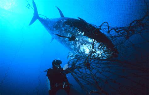 NOAA 200th: Visions: A Giant Tuna