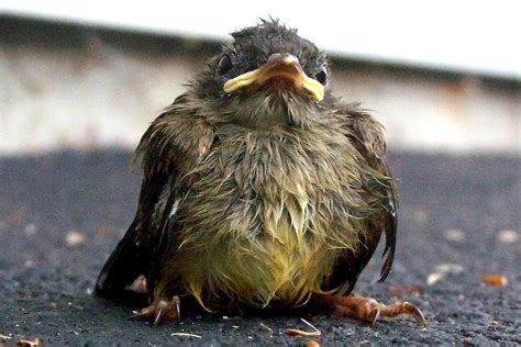 what not to do if you find a baby bird
