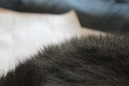 cat dander   treatment lovetoknow