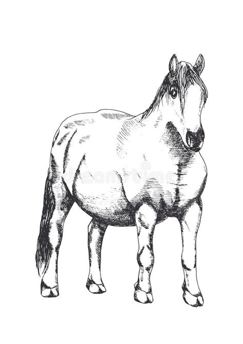 horse hand drawing stock vector illustration  horse