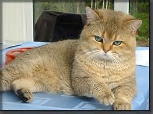 tom cats vonpradorei tom cats