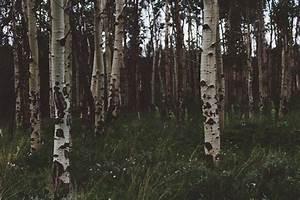 Buhl Konto : keine anspr che bei bepflanzung entsprechend der vorschriften ~ Watch28wear.com Haus und Dekorationen