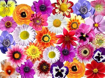 Flowers Colorful Flower Pixabay Nature Garden