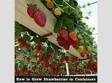 Home Vegetable Garden In Pots wwwpixsharkcom Images