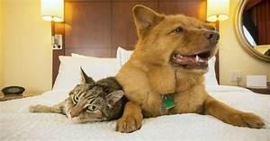 Hotel Pour Chien : les 4 plus beaux h tels de luxe pour chiens et chats ~ Nature-et-papiers.com Idées de Décoration