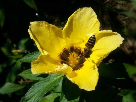 bunga dan lebah mamarey
