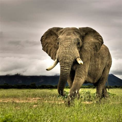 Android Animal Wallpaper - animal elephant wallpaper sc smartphone