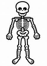 Skeleton Coloring Pages Bones Bone Cartoon Skeletons Dog Standing Printable Halloween Esqueleto Drawing Clipart Human Humano Drawings Cartoons Template Para sketch template