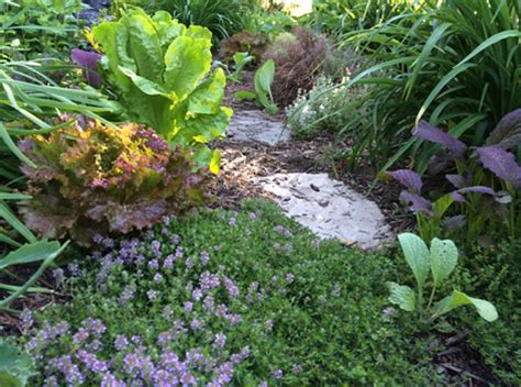 Permaculture Companion Planting On Steroids Organic