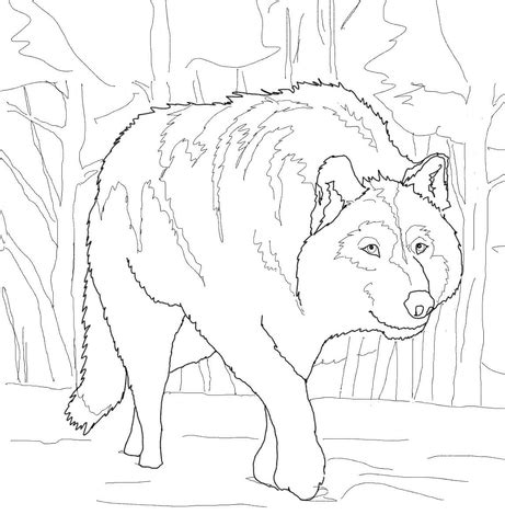 crouching gray wolf coloring page  printable coloring pages