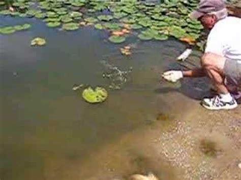 largemouth bass eats ground squirrel youtube
